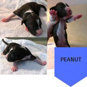 Puppy 2 (2)