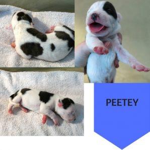 Puppy 4 (1)