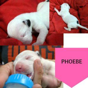 Puppy 8 (2)