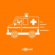 ZippiVet-EmgVet-blog-1024x1024