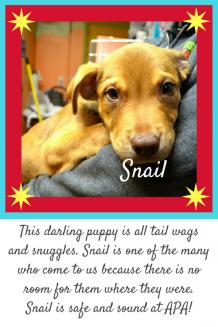 Snail Story