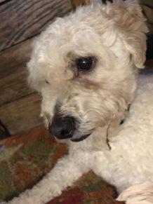 dog with broken leg at animal shelter