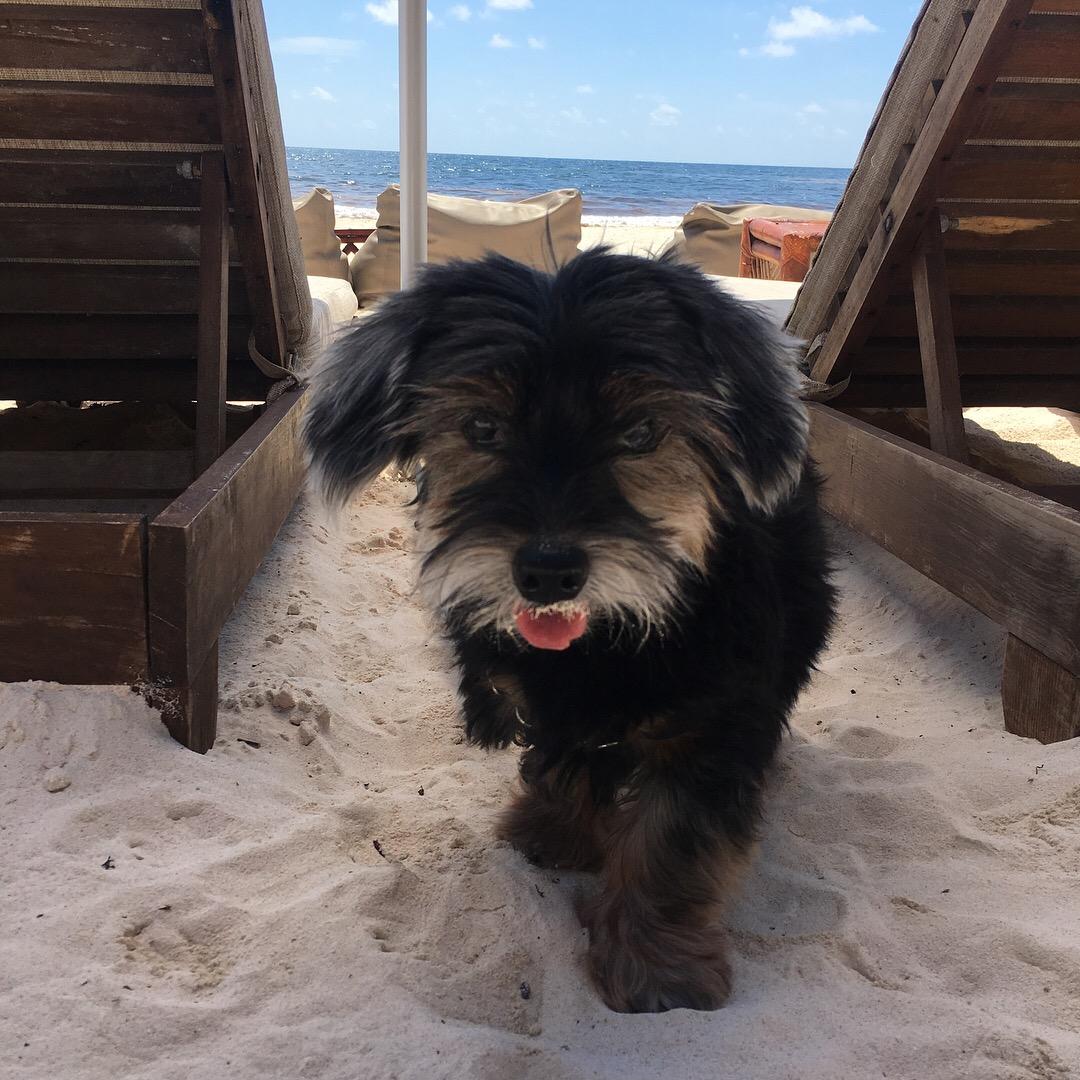 Austin Pets Alive! Padfoot's New Lease on Life - Austin Pets Alive!